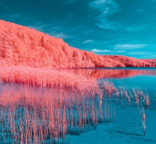 living coral UV lake trees